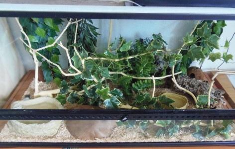 terrarium-exo-terra