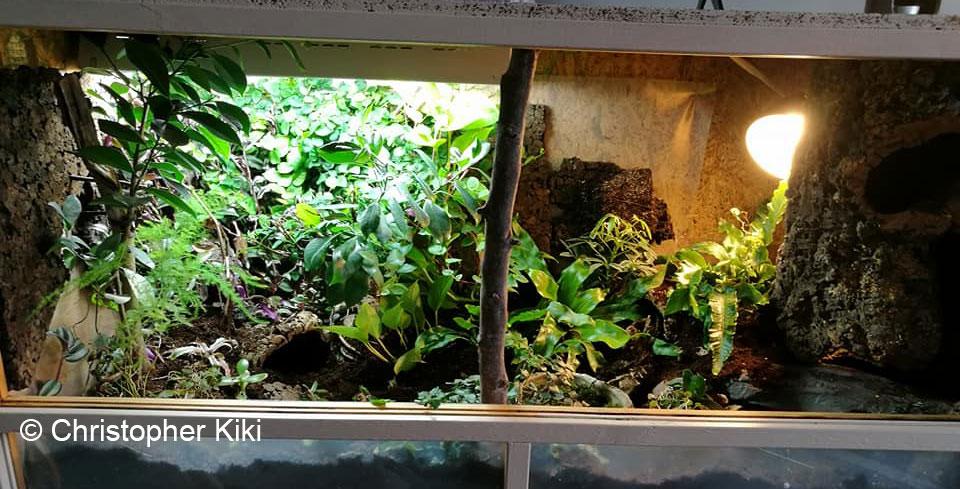 terrarium fait maison pour serpent ventana blog. Black Bedroom Furniture Sets. Home Design Ideas