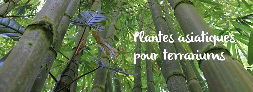 plantes-asiatiques-terrariums
