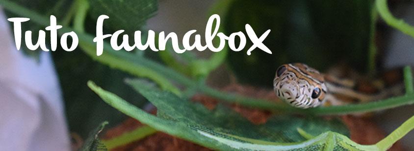 tuto-faunabox