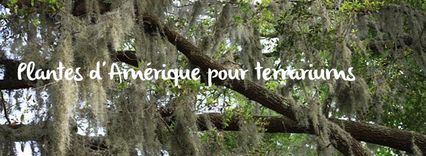 plantes-amerique-terrariums
