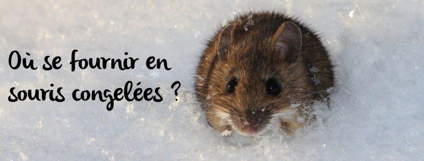 acheter-souris-congelées