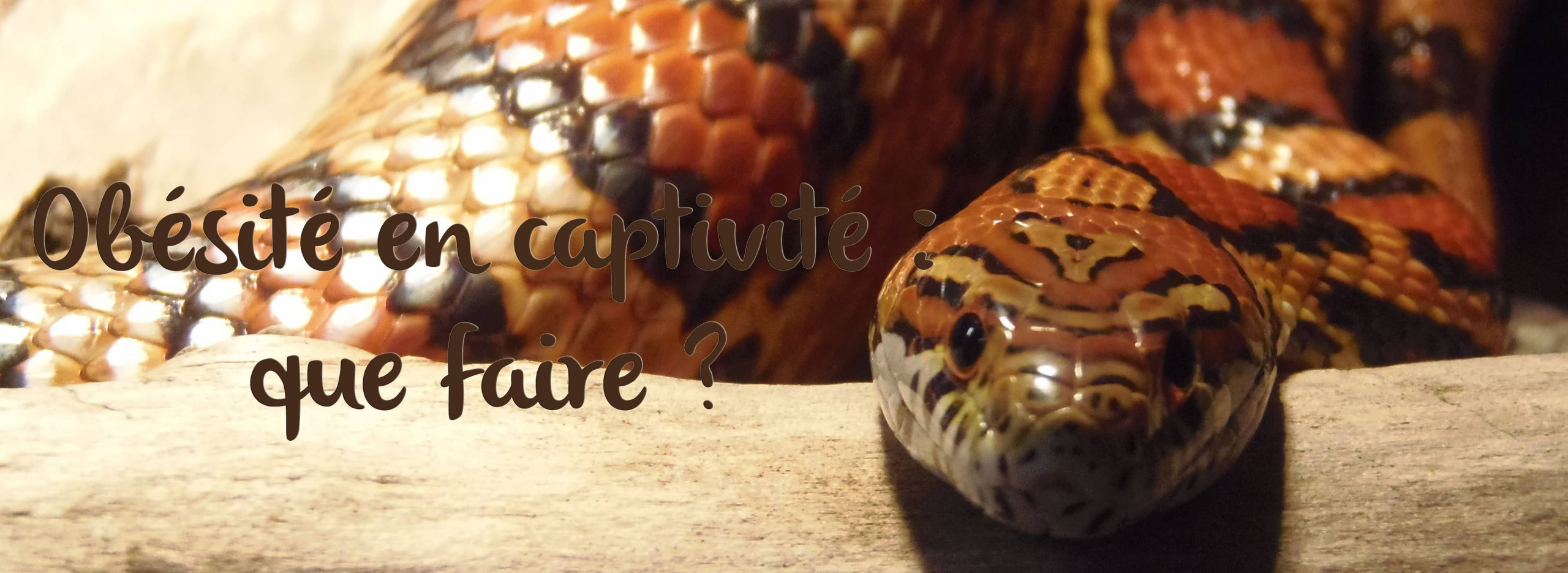 obesite-reptile-captivite